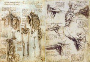 anatomía humana para escultores