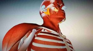 anatomía humana de digital human